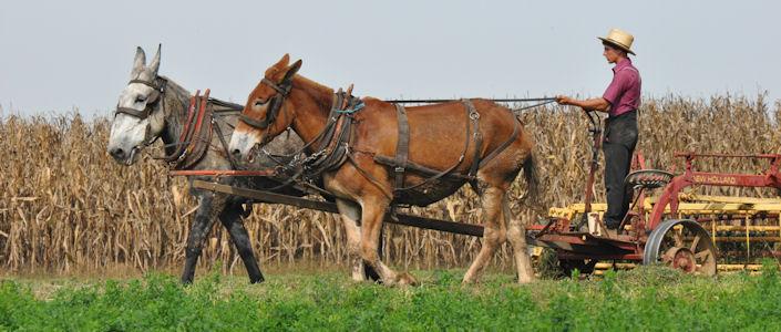 farmer-two-mule-team