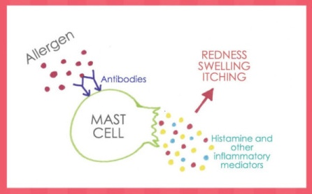 Tolerance in a Test Tube Revisited: Mast Cell Activation Shows Promise As New Food Allergy Diagnostic